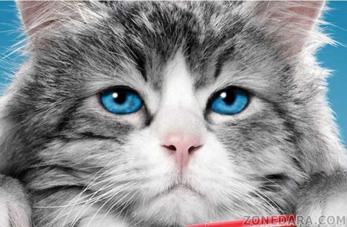 แมวตัวนี้ เพี้ยนสุดโลก