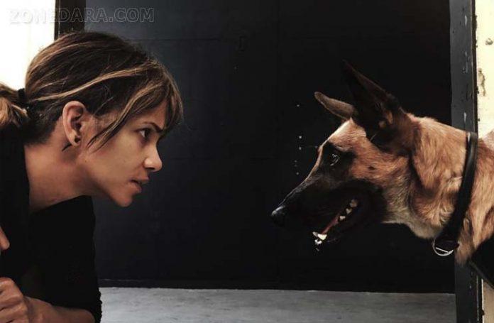 ฮัลลี่ เบอร์รี่ ทุ่มสุดตัว เทรนนิ่งหมาพันธุ์ดุในJOHN WICK: CHAPTER 3 – PARABELLUM