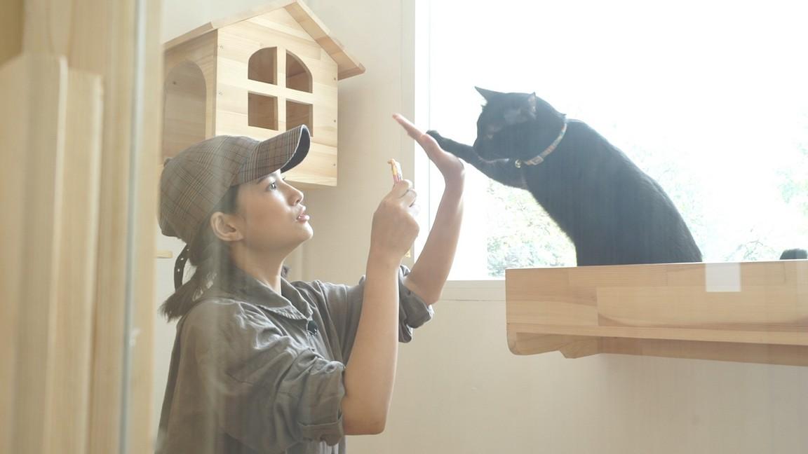 รายการ ชีวิตติดแมว